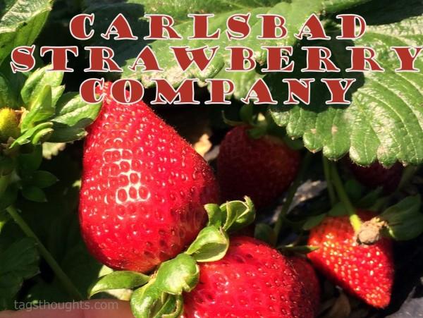Carlsbad Strawberry Farm; San Diego