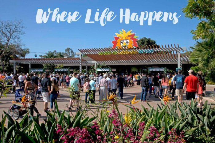 San Diego Zoo; Where Life Happens. Celebrate 100 years during the centennial summer. TrishSutton.com #sdzoo100 https://ooh.li8e68002