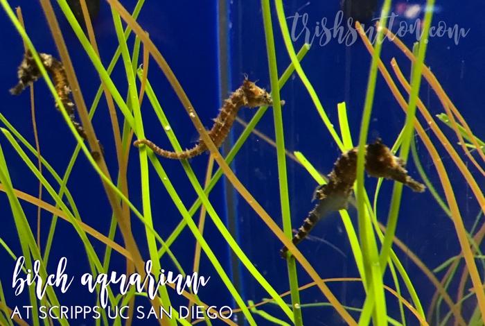 Birch Aquarium At Scripps Uc San Diego La Jolla California
