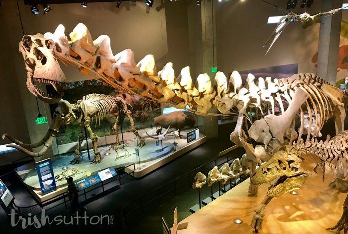 Perot Museum of Nature and Science; Dallas, Texas Dinosaur Museum. TrishSutton.com